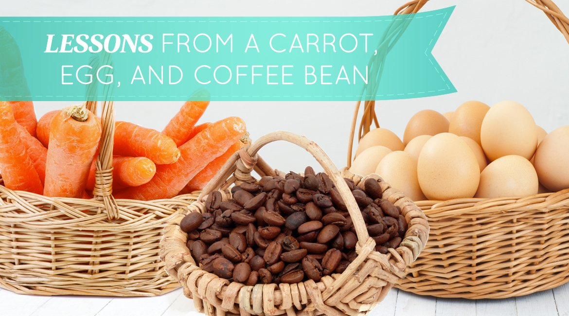 carrot egg and coffee bean essay