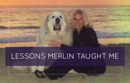 Lessons Merlin Taught Me